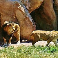 Not Lion, Your my mane squeeze. Don't Leave!