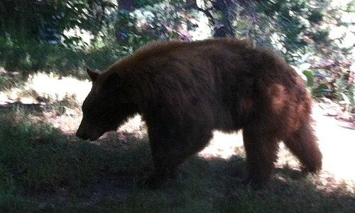 A friendly wilderness neighbor (telephoto).