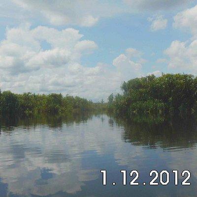 river and plant at sabangau river