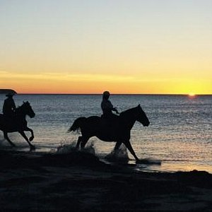 High Country Trails Horses on Beach