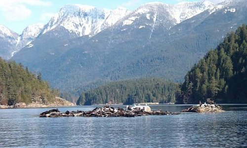 Seals sunning on a rock at the entrance to Desolation Sound.
