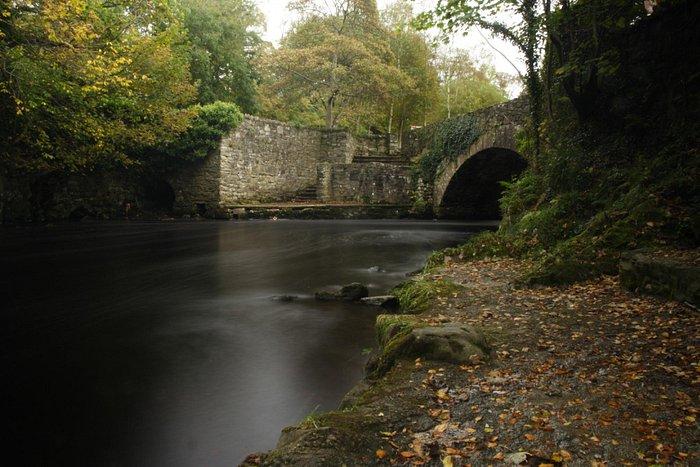 Eye of the Bridge Swan's Park