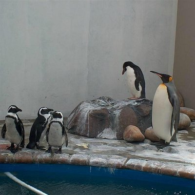 Some of the penguins