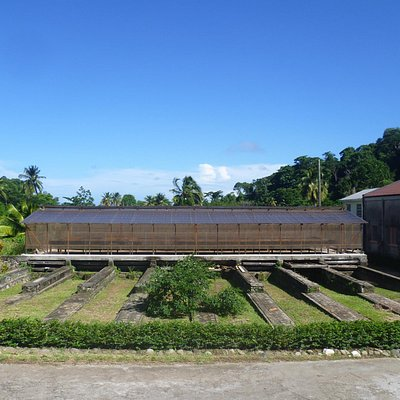 drying sheds for cocoa beans