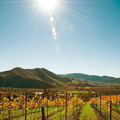 World-class wines, scenic vineyard views and friendly hospitality