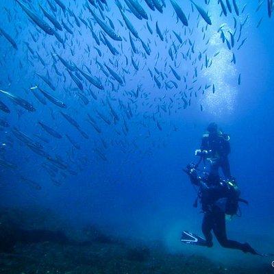 Arraia Divers, Angra do Heroismo, Terceira, Azores, Portugal