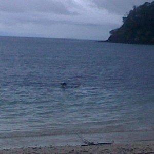 Snorkeling - Coiba; Canales Afuera