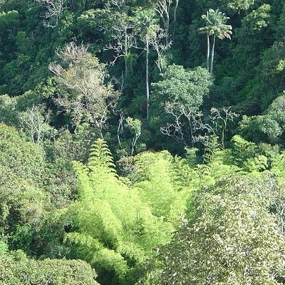 """Our well preserved Rain Fores,t overlooking the """"Guadual"""" (native bamboo)."""