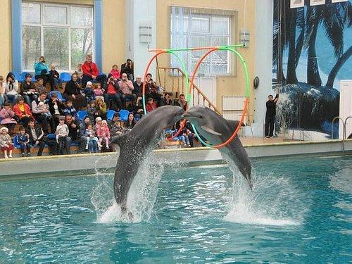 дельфины прыгают через кольца