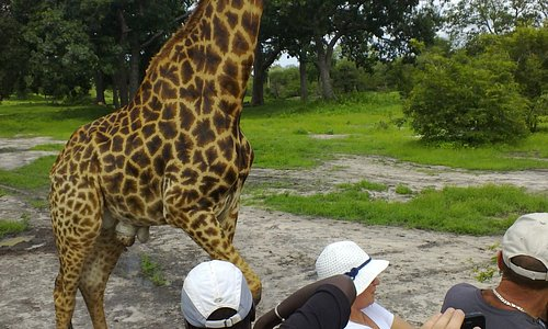 Black and white safari provides excellent services to see the nature ,learn about the Gambian cu