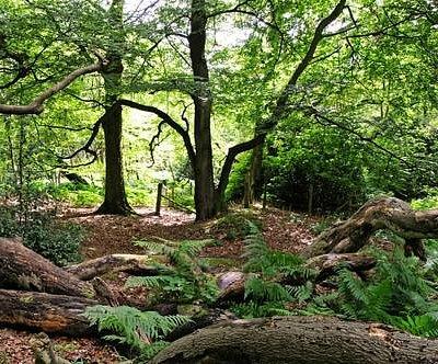 Bowdown Woods. Photo by Rob Appleby.