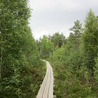 The wooden trail makes sure you won't get lost