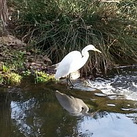 We always see beautiful egrets on our hikes.