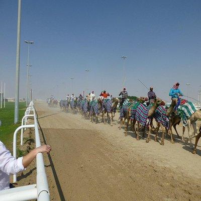 Al Shahainya Camel Racetrack