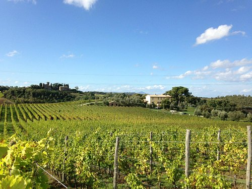 Vineyard and estate
