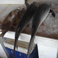 Sharks for sale at Sharjah Fish Market