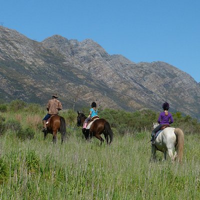 Always the mountain views everwhere you go, horse riding for all ages