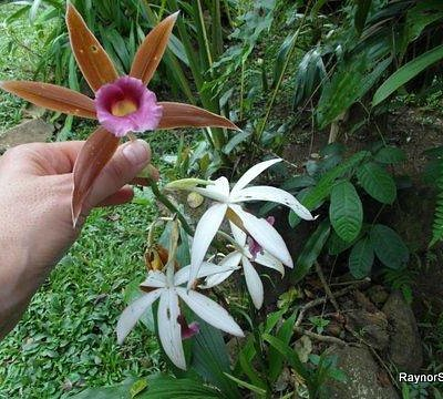 A variety of orchids are grown