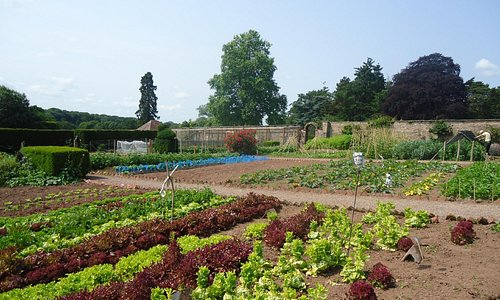 Part of our acre of working walled garden