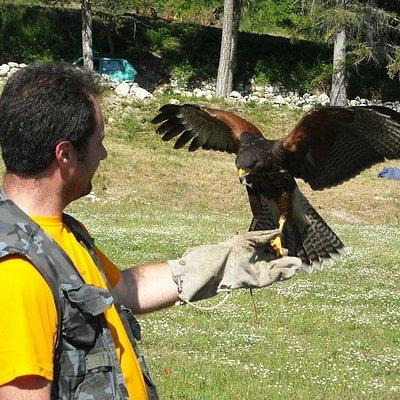 Dimostrazione di falconeria