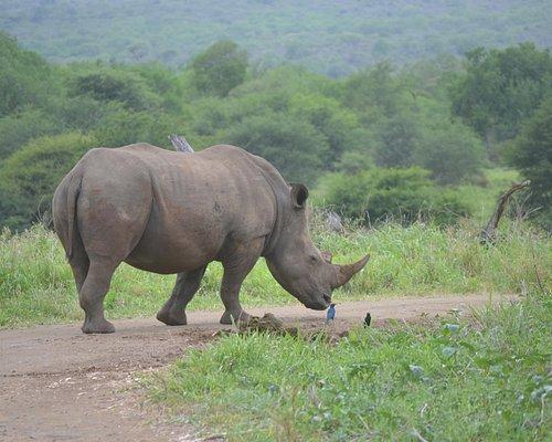 Come see me on safari with Monzi Safaris