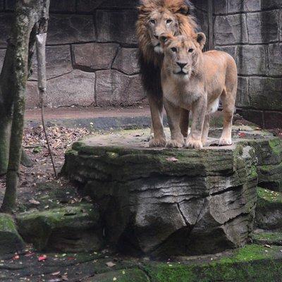 Kandang Singa