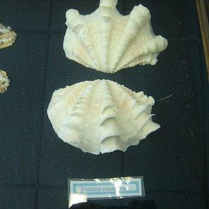 Museu de Vida Marinha- Ubatuba
