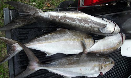 some of the fish i caught on the sea love!!!!!