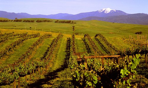 Delatite Winery vineyard - not accessible to public