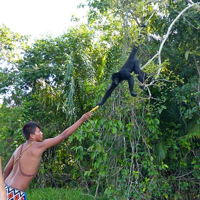 Spider monkey was caged and can't fend for itself. Embera tour