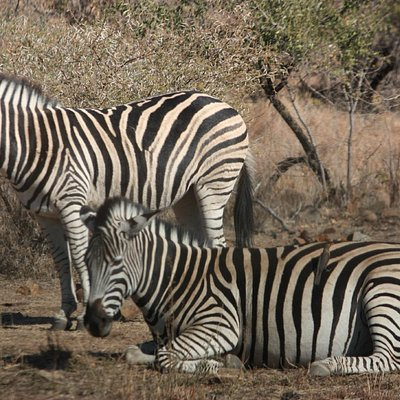 Was dying to see the Zebra…