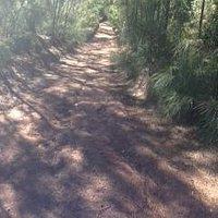4WD trail