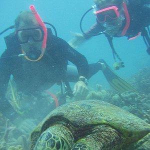 Sea turtle & trainees