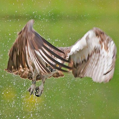 Fully guided wildlife photography in the Cairngorm National Park
