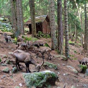 Passeggiata all'interno dell'area dell'osservatorio a stretto contatto con gli animali