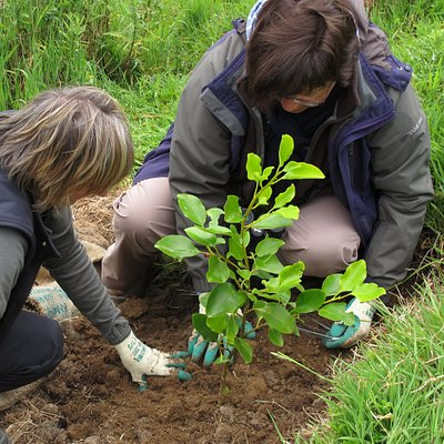 We provide an opportunity to contribute to a native re-vegetation project