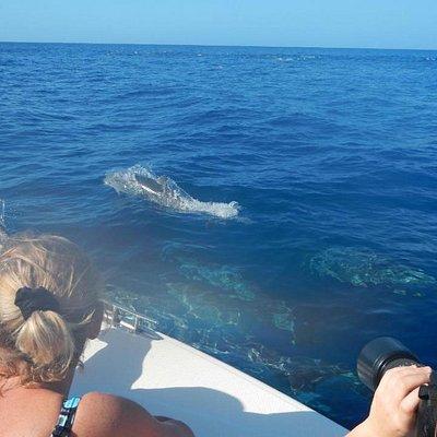 dauphins de fraser