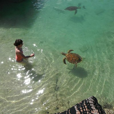 swimming with the turtles was amazing