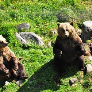 The cutest brown bear :)