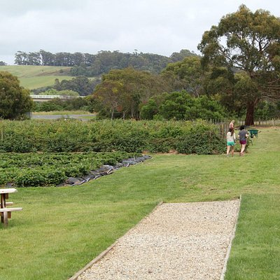 Turners Beach Berry Patch