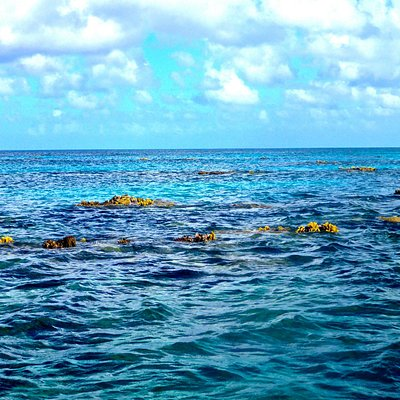 Bahamas Spiney Lobster