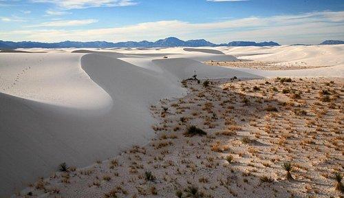 Shifting White Sand dunes