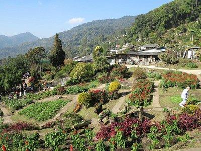 Flower Garden @ Hmong village