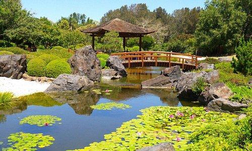 The Japanese Garden. ..