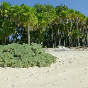 Forest at beach