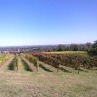 Villa Viriginia vineyard astonishing view