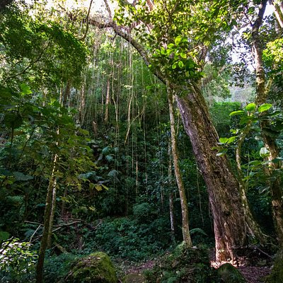 Pipeline trail trees