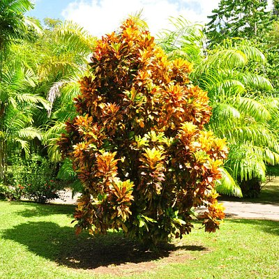 Not your father's croton