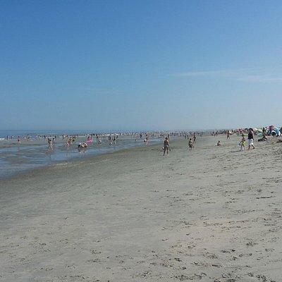 Hoek van Holland beach in summer
