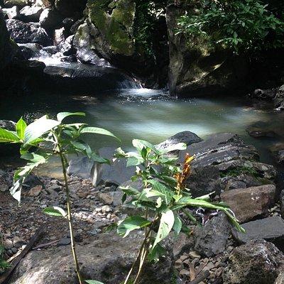 A pool at El Yunque